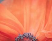 Flower Photograph, Poppy Flower Photo, Fine Art Photography Print, Nature, orange, petals, floral wall decor