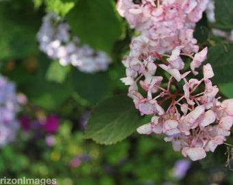 Pink Flower Photo 8 X 10