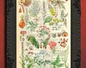 poison plants print dangerous plants print botanical herbarium print