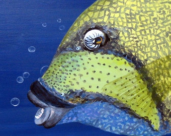 Original Acrylic TITAN TRIGGER FISH Painting with Bubbles