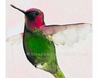 Hummingbird Art - Annas Hummingbird - Fine Art Print Bird Fuchshia Pink and Green - Hummingbird watercolor