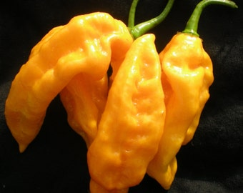 World's Hottest Peppers Seed Collection, Moruga,Butch t,Bhut Jolokia,and MORE!!!