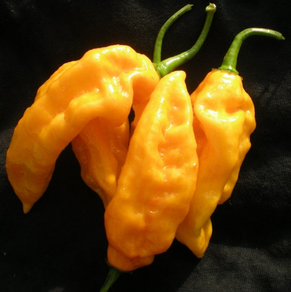 Hottest Pepper In The World List World's Hottest Pepper...