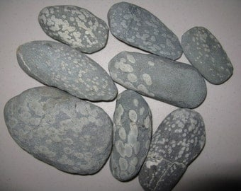"""8 Turtle Rocks, 2.5""""-4"""", NW Native Rock, Natural and Unique,Craft Rock,River Rock,Beach Rock"""