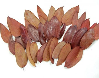 200 pc Beautiful Preserved Dried Oval Leaves Copper Burgundy Autumn Wedding Cottage Shabby Decor Botanical Wholesale Craft Leaf