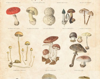 Vintage Botanical Chart, Fungi Table, Danish Educational Chart Limited Edition Art Print