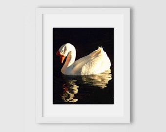 Long-Neck Duck and His Reflection Print | Nature Photography | Home Decor | Home & Office | Gift Under 30