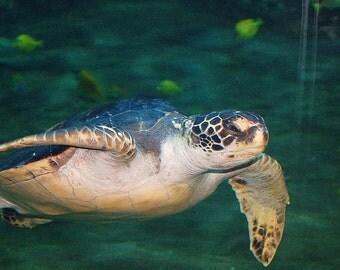 Aquarium Turtle Photography