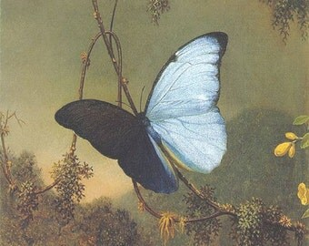 "Martin Johnson Heade, Blue Morpho Butterfly, 1865, 11X14"" Cotton Canvas Print, butterflies,blue butterflies, flying insects, antique art"