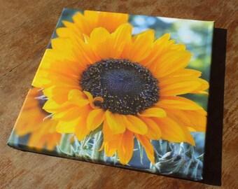 Sunflower canvas ** HALF PRICE **