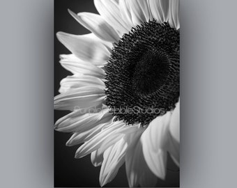 Downloadable images, Instant Digital Download Black and White Sunflower close up, photograph, photography, also available as a print