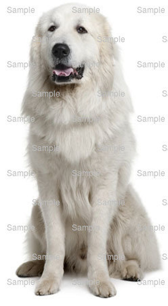 Great Pyrenees Dog Birthday - Edible Cake and Cupcake Topper For Birthday's and Parties! - D6675