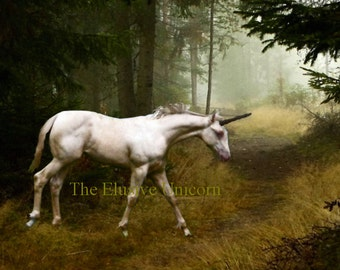 Forest path....  8 x 10 Unicorn print photograph altered art painting nature trees. forest renaissance gothic