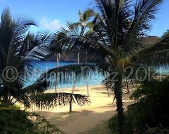 Palm trees, beaches and Hanauma Bay
