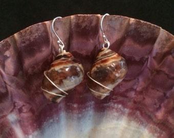 Seashell Earrings Wrapped in Sterling Silver