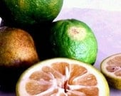 RARE~EXOTIC~HEIRLOOM Tropical Organic Super-Versatile Super-Healthy Delicious Seville Marmalade Orange Caribbean Fruit Seeds