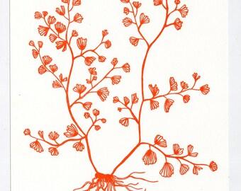 Maidenhair Fern letterpress print