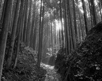 Kumana Kodo Pilgrimage - Takahara to Hongu