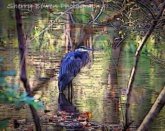 Blue Heron Photography, Home Decor, Blue Heron, Bird Photography, Fine Art Photography, Nature Photography, Impressionistic Photography