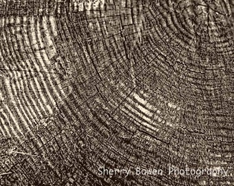 Old Tree Ring, Tree Photography, Abstract Photography, Nature Photography