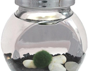 Marimo Pet Mini Aquarium Kit - Free USA Shipping