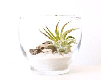 Miniature Air Plant Beach Terrarium / Votive Naturescape / Home - Wedding - Table Decor / Shower Favor