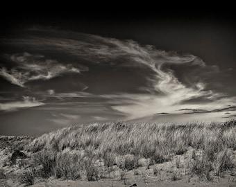 Beach Photography, Beach Grass, Fine Art Photography, Black and White, Landscape Photography, Wall Art, Home Decor, Ocean Grass, Print