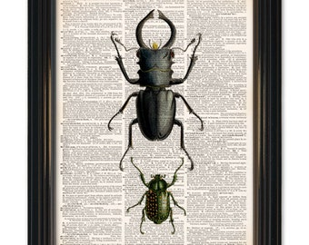 Insect dictionary art print of Beetle. Awesome insect printed on vintage dictionary page 8x10 inches. Buy any 3 prints get 1 free!