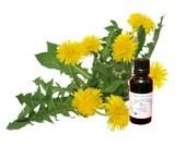 Organic Dandelion Herbal Tincture/Extract - alcohol free - >50ml<