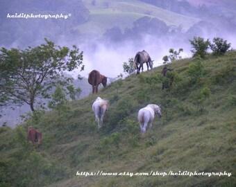 Wild Horses~  **Art**Central America**Unedited**Wall Art* *Office Art**Photography**Print**  **Decor**Design**Photographic Art** *Wild*Horse