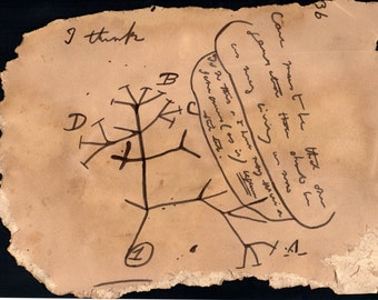Darwin's Unpublished Tree of Life Brown Text- Hand Drawn Vintage Science Drawing Art