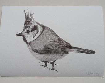 Crested Tit Illustration Giclee Print, A5