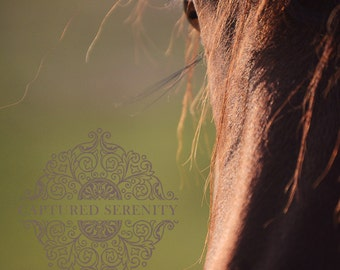 Sun setting behind a beautiful horse