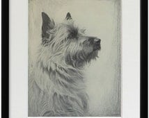 Cairn Terrier print, fine art print from 1930's drawing by British artist Malcolm Nicholson, framed, unframed, with or without mat