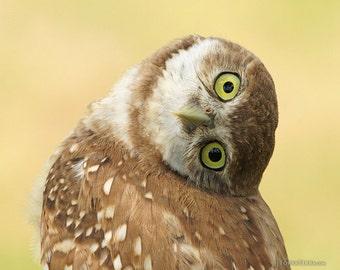 Burrowing Owlet Curiosity Cute Baby Owl Eyes Head Turned Upside Down Sideways Paper Print - Wildlife Photography