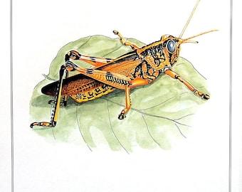 Bird Grasshopper - Animal Print - 1982 Vintage Book Page - 7.5 x 10