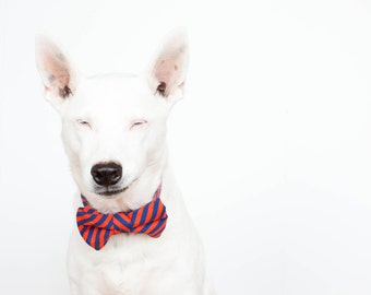 Bowtie Dog Collar - Puppy Prep Stripe