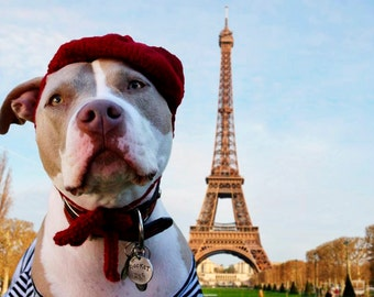Petite French Beret for Large Breeds - English Bulldog Hat - Pitbull Hat - Labrador Retriever Hat