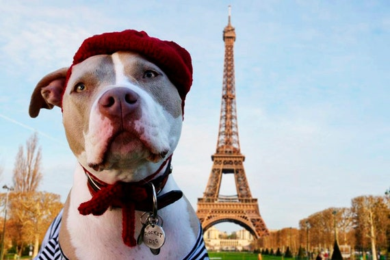 Petite French Beret for Large Breeds
