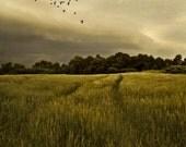 Large Size Wall Art  Landscape Photography Contryside Decor Birds in Flight Quebec Wheatfield Lotbiniere 24x36 PRINT - Golden Dreams
