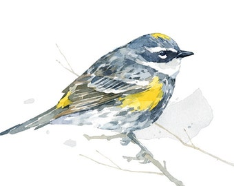 Bird watercolor, Yellow rumped Warbler art print, 5x7