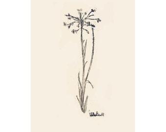 Illustration Print, Download, Digital Print, Printable, Nature Decor, Nature Art, Nursery Print, Botanical, Herbs, Flower Art, Wall Art