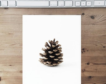 Pinecone 8x10. Fine Art Natural Print. Minimal. Natural Home Decor. Indoor garden botanical