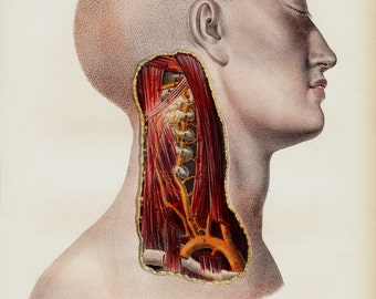 1844 Antique ANATOMY print by Lemercier, fine lithograph of neck dissection, veins, muscles, nerves