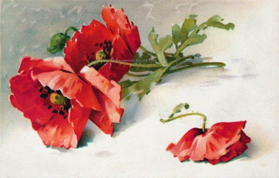 Red Poppies Card | Flowers Greeting Card | Option Matching Sticker
