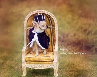 Royal Dog Crown and Cape Set : Mini Rhinestone velvet Dog Crown and cape Prince Crown Newborn Photo Prop... Newborns and Dog costume