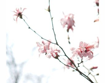 Pink Magnolia Print, Spring Pastel Flower Photo, fine art print, pink flowers, baby pink, tree, blossoms, nursery art, nursery decor