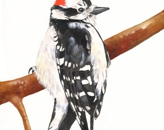 Woodpecker watercolor painting- WP7715 Bird painting PRINT of watercolor painting 5 by 7, bird art, wall art, home decor