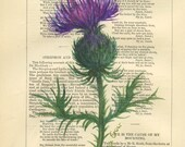 Scottish Thistle  - Original Watercolor Painting - on Antique Book Robert Burns Songs & Poems - page  9x6 inch - by Evelyn