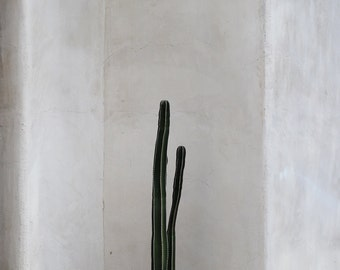Cactus photo, cactus print, cactus canvas, or print, minimalist photo, Southwest decor, Arizona photo, desert photo, earth tones